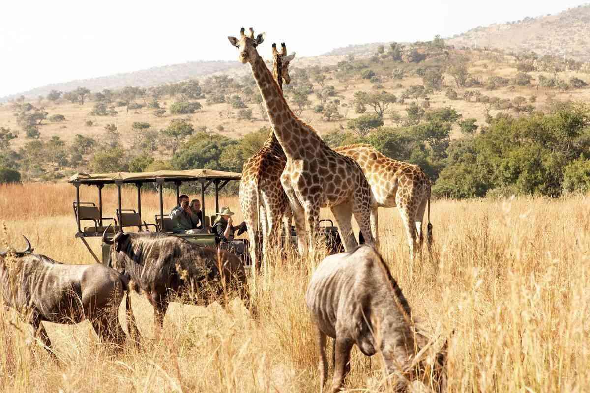afrika apps safari