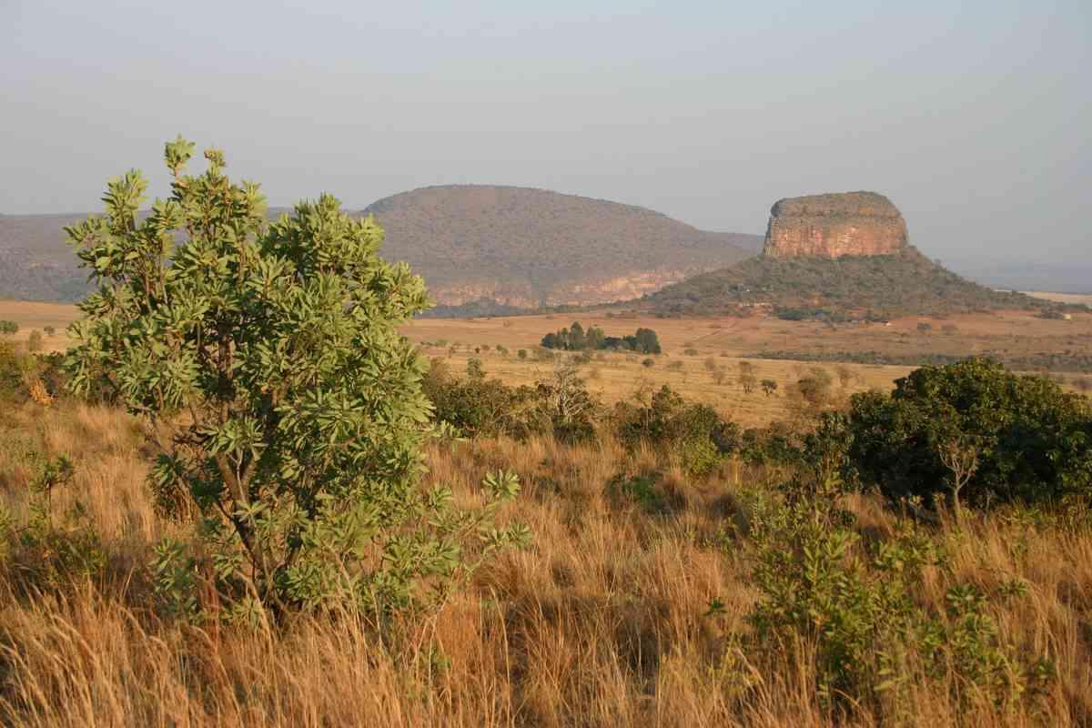 Mobil in Südafrika: Die 8 besten Apps für Stadt- und Wildlifesafaris