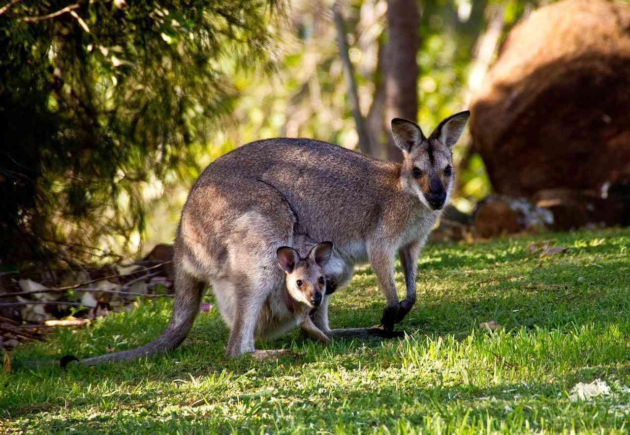 the ghan australien